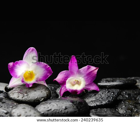 Still life with two orchid on wet pebbles - stock photo