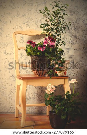 Still Life with two pelargonium and fuchsia on the chair. instagram image retro style - stock photo