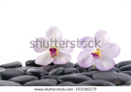 Still life with two white orchid with zen stones