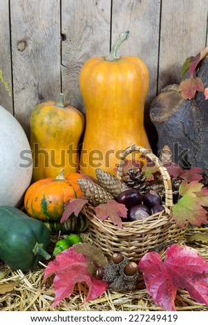 Still Life with Two Yellow Pumpkins, Wicker Basket Filled with Pine Cones, Acorns, Chestnuts and Autumn Leaves on a Hay, Vintage Wooden Planks  Background  - stock photo