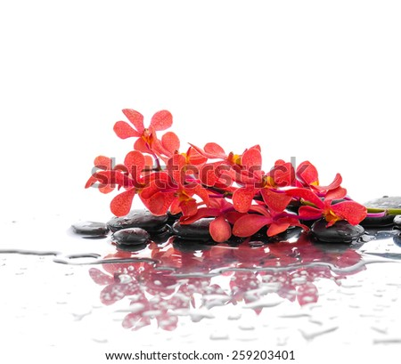 Still life with wet stones with red branch orchid  - stock photo