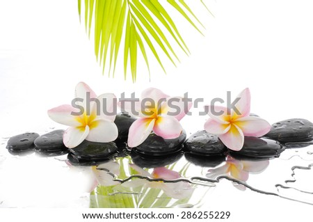 Still life with wet zen stones and Frangipani and palm leaf  - stock photo