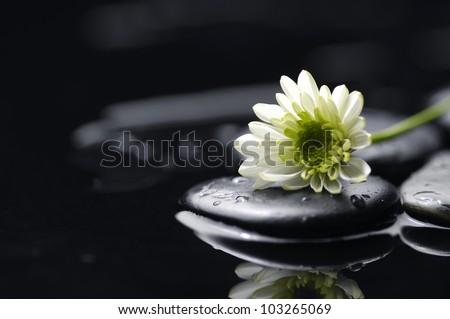 Still life with white chrysanthemum flowers and zen stones - stock photo