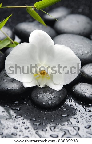 Still life with white orchid with bamboo leaf on zen stones