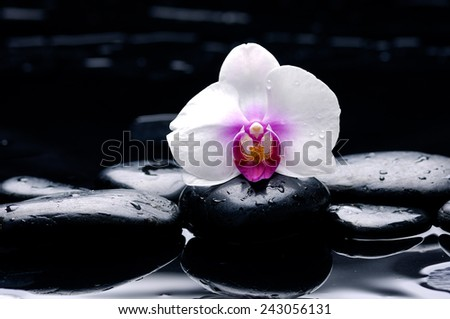 Still life with white orchid with pebbles on wet background - stock photo