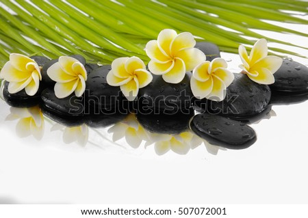 Still life with zen stones and frangipani,palm Still life with zen stones and frangipani,palm