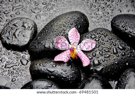 Still of with pink orchid on pebble in water drops - stock photo