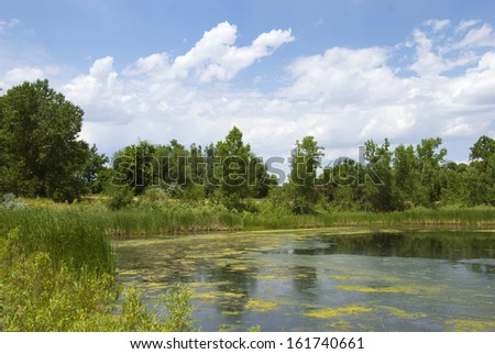 Still pond on the Colorado Prairie with algae scum on the surface, with interesting clouds and trees in the background - stock photo