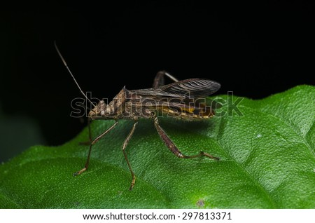 Stink Bug - stock photo