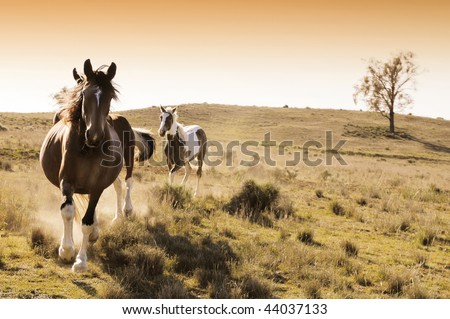 Stock horses on an Australian cattle station at sunrise - stock photo