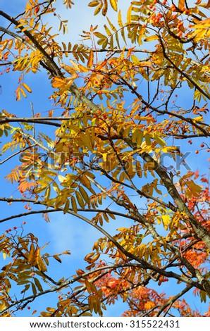 Stock image of autumn foliage  - stock photo