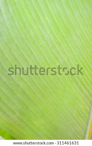 Stock image of closeup of a leaf  - stock photo