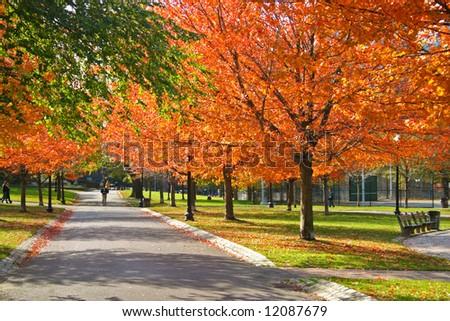 Stock image of fall foliage at Boston Public Garden - stock photo