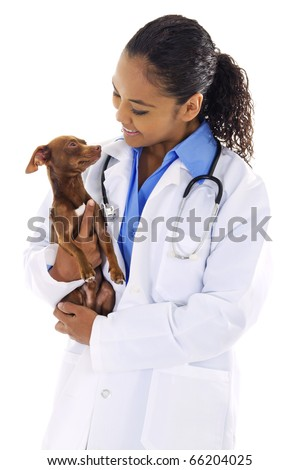 Stock image of female veterinarian with small dog over white background