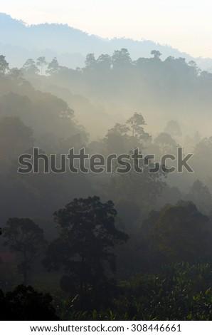 Stock image of foggy landscape  - stock photo