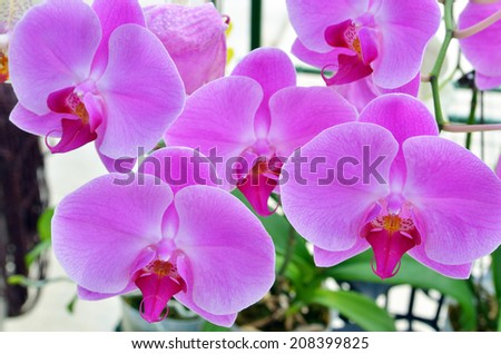 Stock image of orchid flower  - stock photo