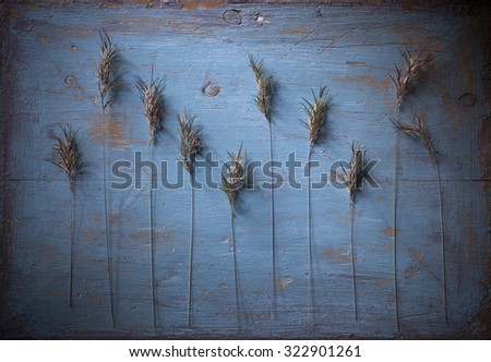 Stock image of plant motive on old  painted wooden background. Daylight falling from upper left corner, strong lens vignetting applied. - stock photo