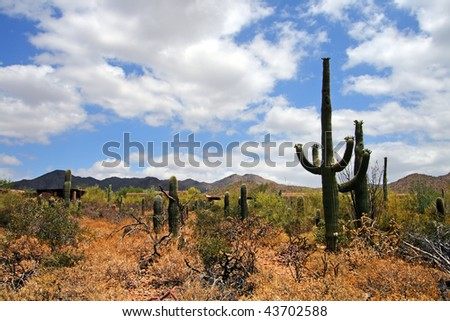 Stock image of Saguaro National Park, USA