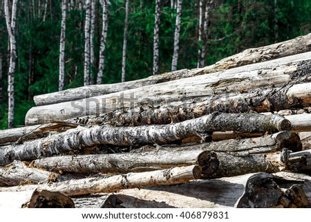 Stock of felled logs near mixed forest in the spring.