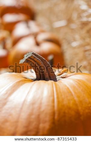 Stock of pumpkins - stock photo
