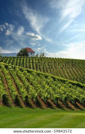 Stock Photo: House in the vineyards in summer.Slovenske Konjice, Slovenia - stock photo