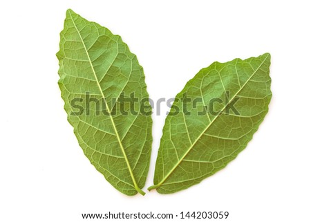 Stock Photo - Natural green leaves