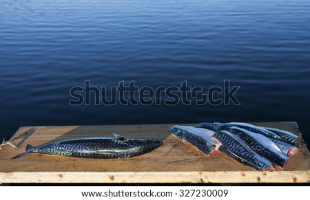 Stock photo of mackerel fillets and a whole mackerel at cutting board at sunlight at seaside in Nordland, Norway. - stock photo