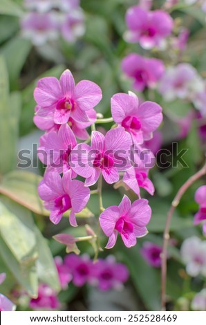 stock photo orchid colorful with pink purple white and green shade under the sunlight, focus on center flower and blur other flowers - stock photo