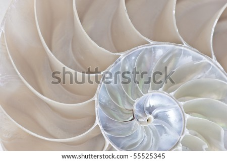 Stock photograph of a Half Shell Nautilus pompilius - stock photo