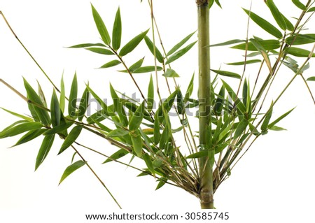 Stock with green bamboo branch - stock photo