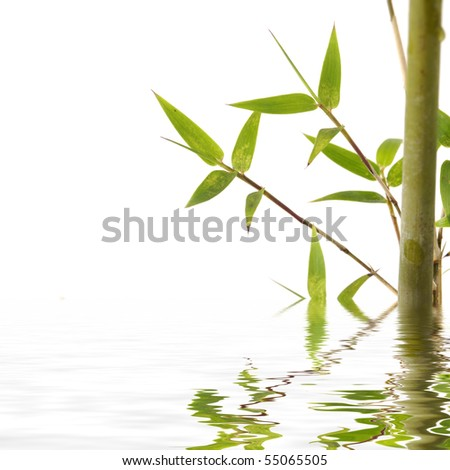 Stock with green bamboo reflection - stock photo