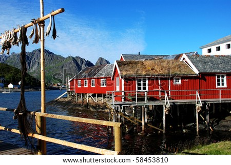 Stockfish in Lofoten - stock photo