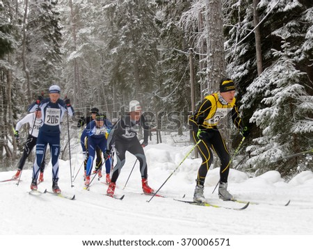 STOCKHOLM - JAN 24, 2016: Group of cross country skiing men in the beautiful spruce forest at the Stockholm Ski Marathon event January 24, 2016 in Stockholm, Sweden - stock photo