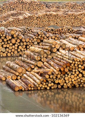 Stockpiled cut and trimmed tree trunks in an industrial timberyard to be processed in a sawmill into lumber - stock photo