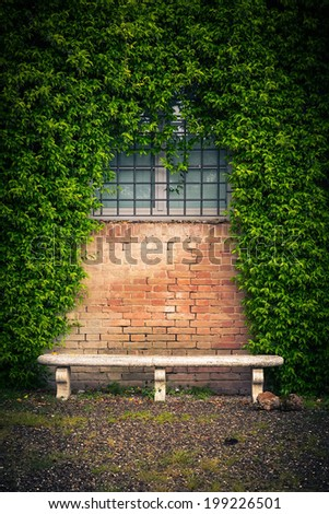 Stone bench and ivy on the old wall  - stock photo