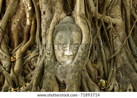 stone buddha head in the tree roots, Ayutthaya is old capital of Thailand - stock photo