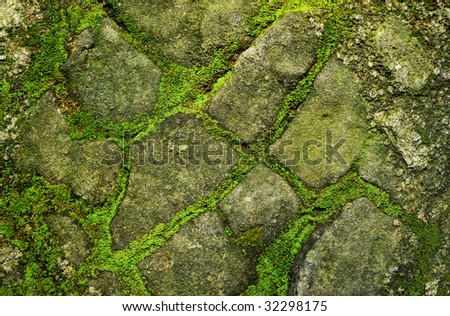 Stone covered by moss