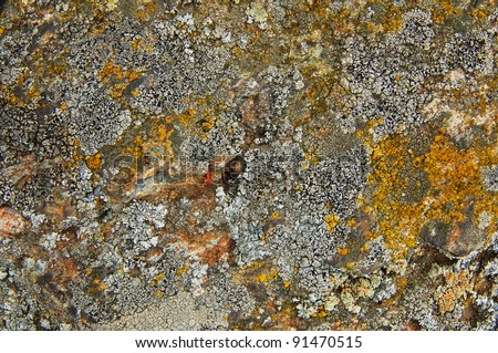 stone covered with lichen - stock photo