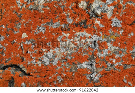stone covered with red lichen