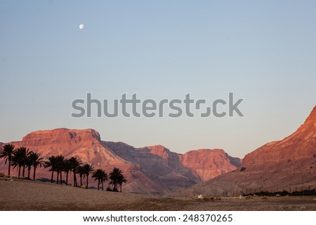 Stone Desert on the West Bank of the Jordan River  - stock photo