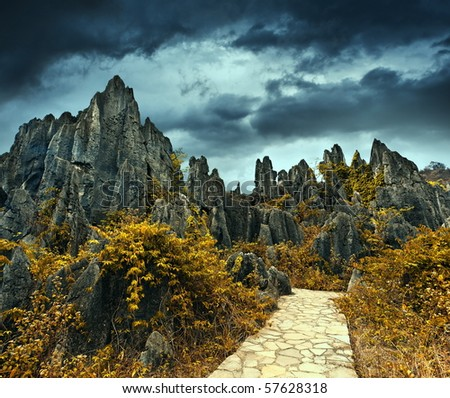 Stone forest - stock photo