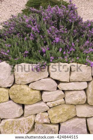Stone Garden - stock photo