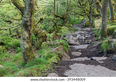 Stone hiking trail through a green forest - stock photo