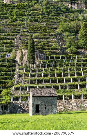 Stone house and vineyards, Pont Saint Martin, Aosta Valley (Italy)