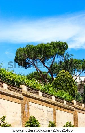Stone-pine in Rome - stock photo