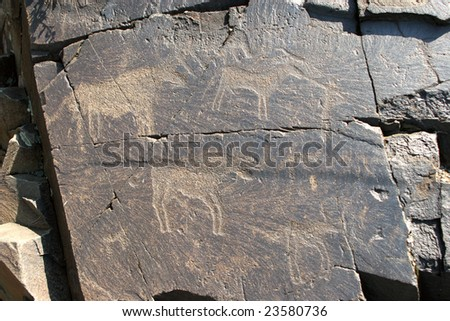 Stone plate with ancient petroglyphic image of three bulls. Area Tamgaly. - stock photo