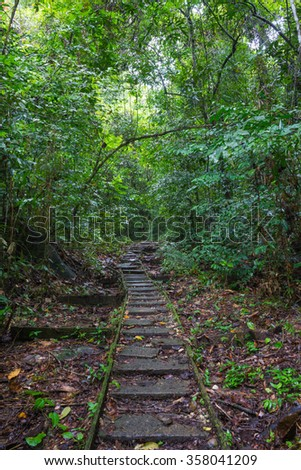 Stone road in a green forest in Gading Mountains, Borneo, Sarawak