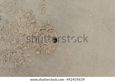 stone shells in sand texture on beach with hole of crab design  - stock photo