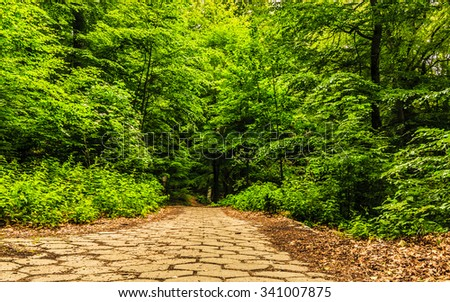 stone sidewalk walking pavement in a park or forest outdoor. Tranquil scene. - stock photo