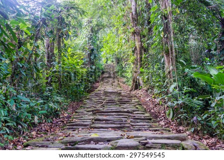 Stone stairs in the jungle at Ciudad Perdida, the lost city of Colombia - stock photo